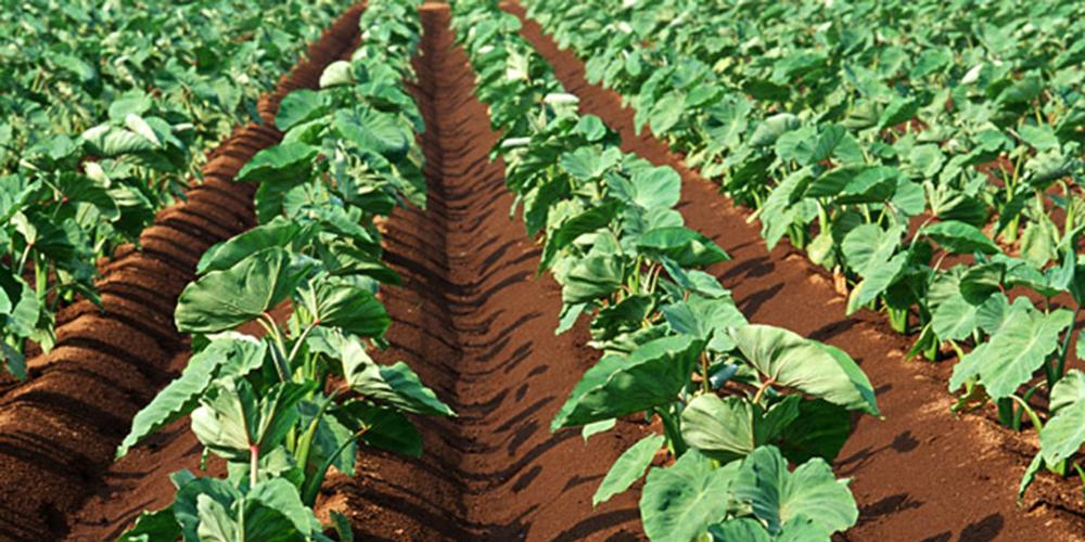 有機肥料の愛健 - 微生物肥料で...